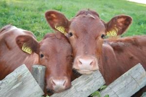 Mikroorganizmi EM so pomembni tudi v živinoreji