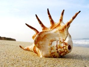 Prej mrtvo morje je po tretiranju z EM primerno za gojenje prehransko neoporečnih školjk